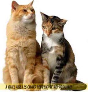 A Quel Age Les Chats Peuvent Se Reproduire Aniimoo