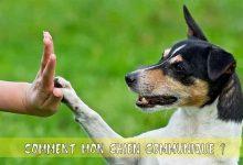 Comment-mon-chien-communique00