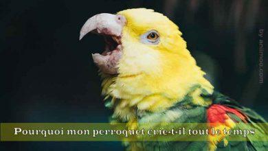 Pourquoi-mon-perroquet-crie-t-il-tout-le-temps-00