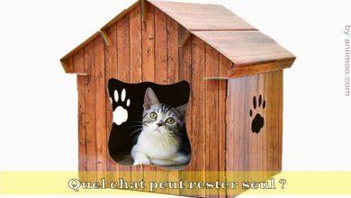 Quel-chat-peut-rester-seul-00