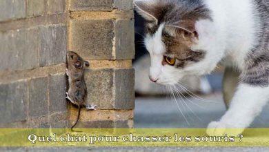 Quel-chat-pour-chasser-les-souris-00