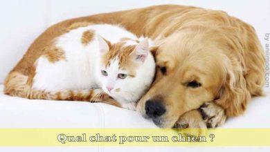 Quel-chat-pour-un-chien-00