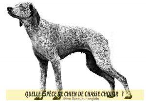 Quel-chien-de-chasse-choisir-12-chien-braqueur-anglais