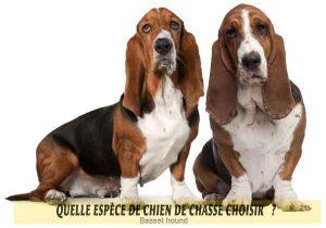 Quel-chien-de-chasse-choisir-14-Basset-hound