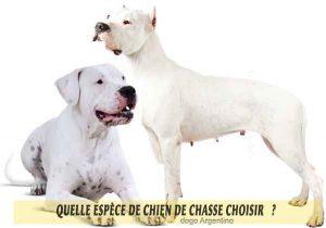 Quel-chien-de-chasse-choisir-15-dogo-Argentino