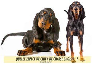Quel-chien-de-chasse-choisir-17-Coonhound