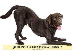 Quel-chien-de-chasse-choisir-18-chien-de-Plott