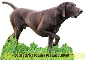 Quel-chien-de-chasse-choisir-20-Chukar