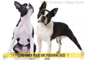 Quel-chien-pour-une-personne-âgée-06-Terrier-de-Boston---Boston-Terrier