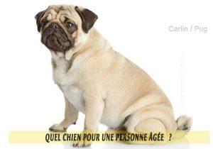 Quel-chien-pour-une-personne-âgée-15-Carlin---Pug