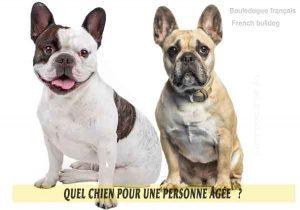 Quel-chien-pour-une-personne-âgée-17-Bouledogue-français---French-bulldog