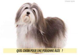 Quel-chien-pour-une-personne-âgée-20-Lhasa-apso
