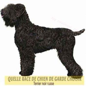 Quelle-race-de-chien-de-garde-choisir--34-Terrier-noir-russe
