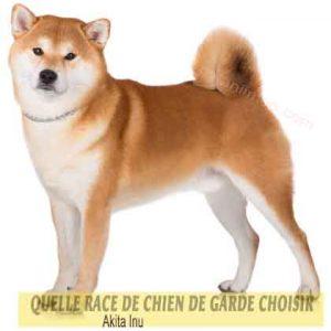 Quelle-race-de-chien-de-garde-choisir--38-Akita-Inu