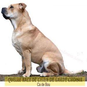 Quelle-race-de-chien-de-garde-choisir--43-Ca-de-Bou