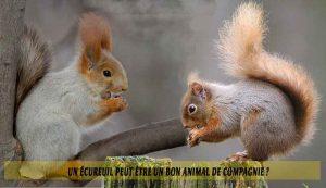 Un-écureuil-peut-être-un-bon-animal-de-compagnie.-01