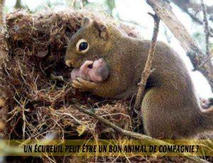 Un-écureuil-peut-être-un-bon-animal-de-compagnie.-03