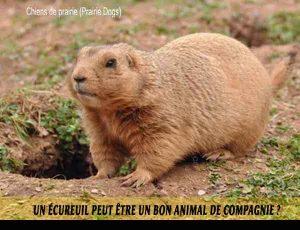 Un-écureuil-peut-être-un-bon-animal-de-compagnie.-05