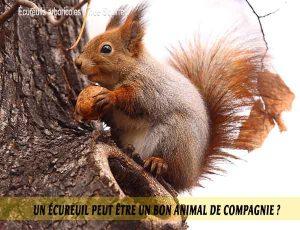 Un-écureuil-peut-être-un-bon-animal-de-compagnie.-06