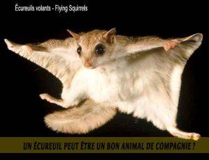 Un-écureuil-peut-être-un-bon-animal-de-compagnie.-07