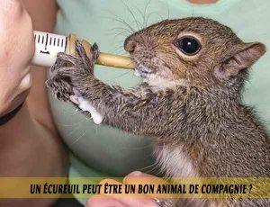 Un-écureuil-peut-être-un-bon-animal-de-compagnie.-08