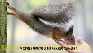 Un-écureuil-peut-être-un-bon-animal-de-compagnie.j09