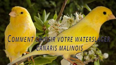 Comment-choisir-votre-waterslager-Waterslager-Canarys-1200-800-02