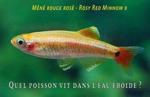 Fancy-Goldfish---Poissons-rouges-de-fantaisie-03