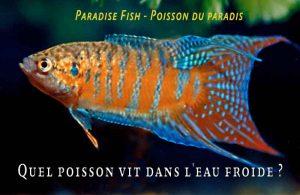 Fancy-Goldfish---Poissons-rouges-de-fantaisie-07