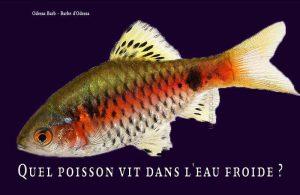 Fancy-Goldfish---Poissons-rouges-de-fantaisie-09