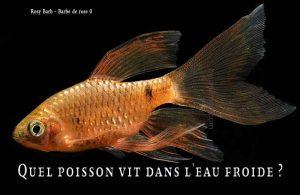 Fancy-Goldfish---Poissons-rouges-de-fantaisie-10