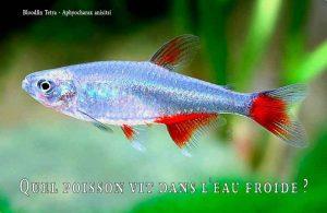 Fancy-Goldfish---Poissons-rouges-de-fantaisie-13
