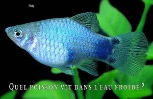 Fancy-Goldfish---Poissons-rouges-de-fantaisie-14