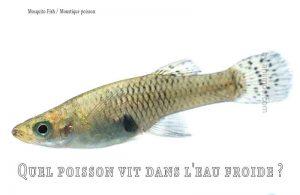 Fancy-Goldfish---Poissons-rouges-de-fantaisie-16