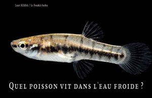 Fancy-Goldfish---Poissons-rouges-de-fantaisie-18