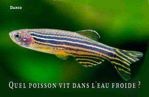 Fancy-Goldfish---Poissons-rouges-de-fantaisie-19