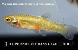 Fancy-Goldfish---Poissons-rouges-de-fantaisie-20