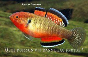Fancy-Goldfish---Poissons-rouges-de-fantaisie-21