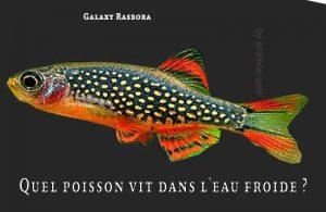Fancy-Goldfish---Poissons-rouges-de-fantaisie-23