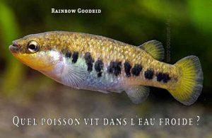 Fancy-Goldfish---Poissons-rouges-de-fantaisie-24