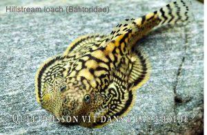 Fancy-Goldfish---Poissons-rouges-de-fantaisie-29