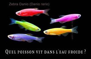 Fancy-Goldfish---Poissons-rouges-de-fantaisie-33