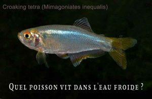 Fancy-Goldfish---Poissons-rouges-de-fantaisie-35