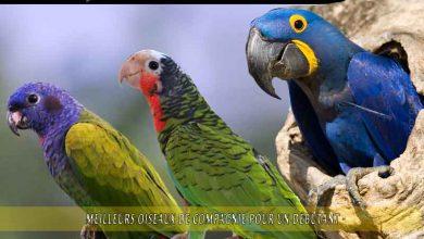 Meilleurs-oiseaux-de-compagnie-pour-un-débutant-00