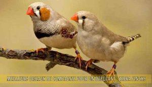 Meilleurs-oiseaux-de-compagnie-pour-un-débutant-02