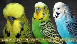 Meilleurs-oiseaux-de-compagnie-pour-un-débutant-03