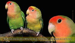 Meilleurs-oiseaux-de-compagnie-pour-un-débutant-05