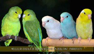 Meilleurs-oiseaux-de-compagnie-pour-un-débutant-06