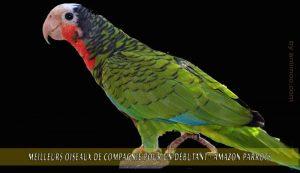Meilleurs-oiseaux-de-compagnie-pour-un-débutant-11