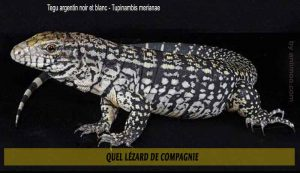 Quel-Lézard-de-compagnie-05